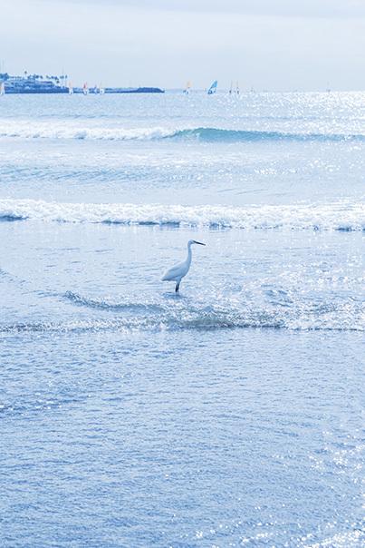 11月の由比ヶ浜海岸_b0145398_23250010.jpg