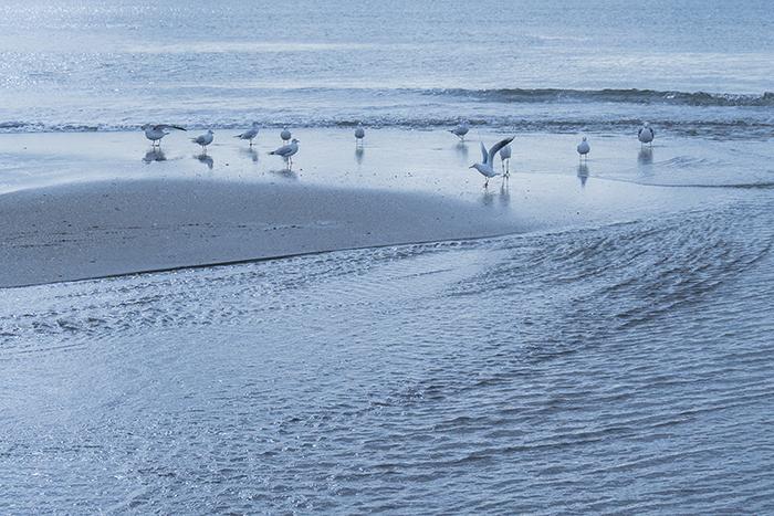 11月の由比ヶ浜海岸_b0145398_23252099.jpg