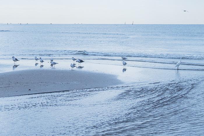 11月の由比ヶ浜海岸_b0145398_23255263.jpg