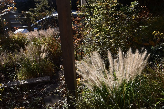 11月24日「緑でつながる庭づくり 秋編」です!_c0124100_18284706.jpg