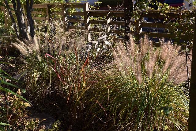 11月24日「緑でつながる庭づくり 秋編」です!_c0124100_18284995.jpg