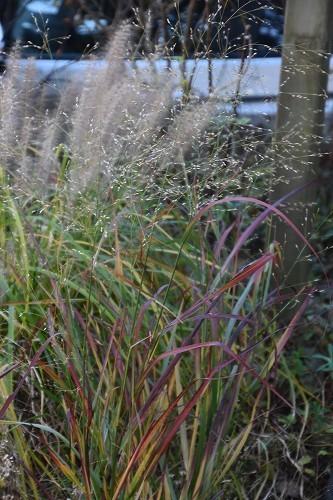 11月24日「緑でつながる庭づくり 秋編」です!_c0124100_18290778.jpg