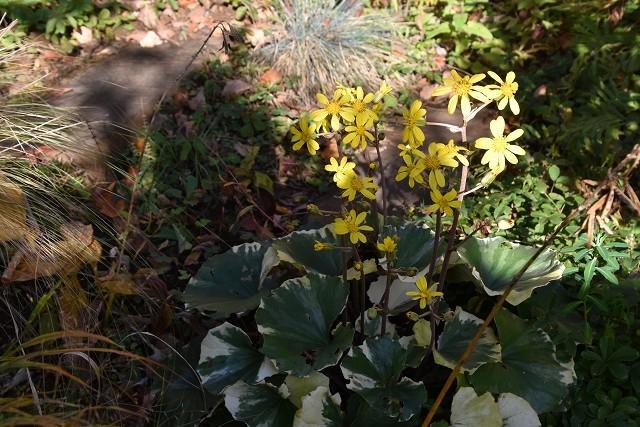 11月24日「緑でつながる庭づくり 秋編」です!_c0124100_18291106.jpg