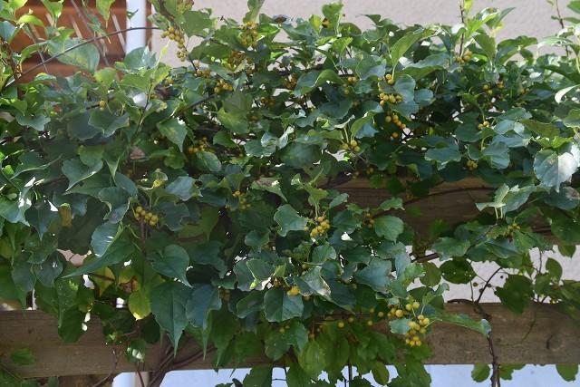 11月24日「緑でつながる庭づくり 秋編」です!_c0124100_18291529.jpg