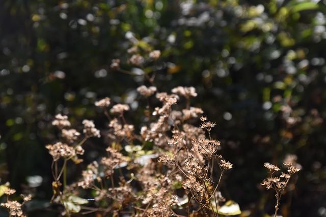 11月24日「緑でつながる庭づくり 秋編」です!_c0124100_18292438.jpg
