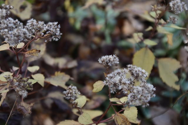11月24日「緑でつながる庭づくり 秋編」です!_c0124100_18292717.jpg