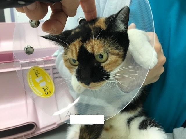 こぐま、負傷猫への医療費のご協力をお願いします_f0242002_15030161.jpg