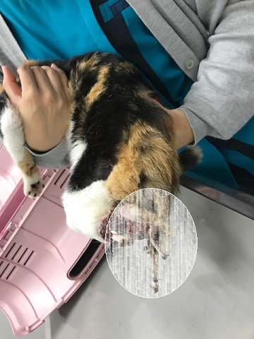 こぐま、負傷猫への医療費のご協力をお願いします_f0242002_15031184.jpg