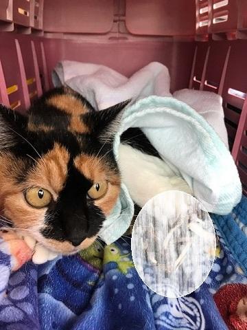 こぐま、負傷猫への医療費のご協力をお願いします_f0242002_16031170.jpg
