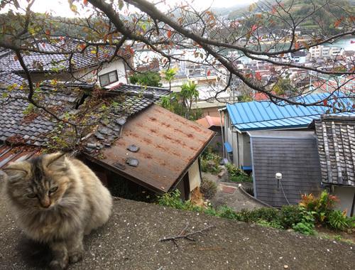 来春の展覧会は広島で。〜 三良坂平和美術館から、尾道へ 〜_d0077603_12005913.jpg
