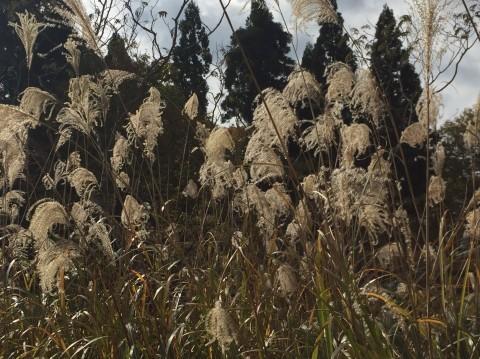 秋のトレッキング   大鹿滝_e0115904_00400210.jpg
