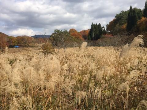秋のトレッキング   大鹿滝_e0115904_00431336.jpg