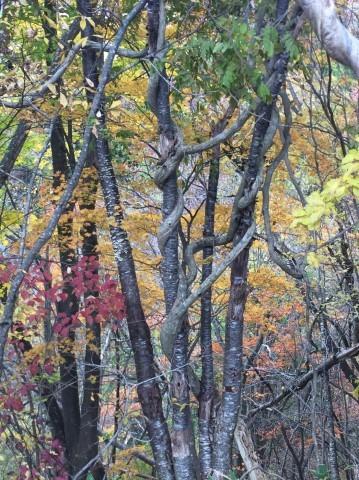 秋のトレッキング   大鹿滝_e0115904_01012749.jpg