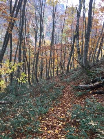秋のトレッキング   大鹿滝_e0115904_01013852.jpg