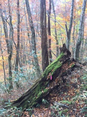 秋のトレッキング   大鹿滝_e0115904_01302308.jpg