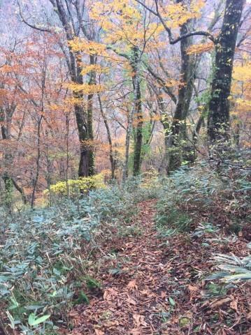 秋のトレッキング   大鹿滝_e0115904_01302328.jpg