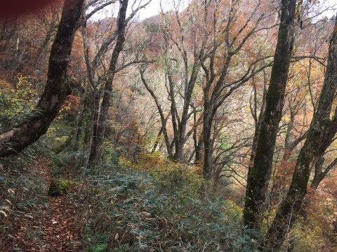 秋のトレッキング   大鹿滝_e0115904_01302370.jpg