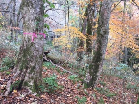 秋のトレッキング   大鹿滝_e0115904_01333115.jpg