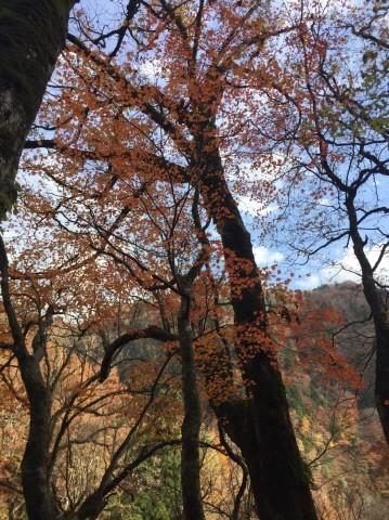 秋のトレッキング   大鹿滝_e0115904_01393234.jpg