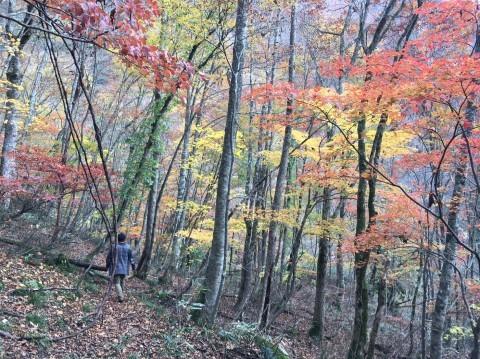 秋のトレッキング   大鹿滝_e0115904_05053166.jpg