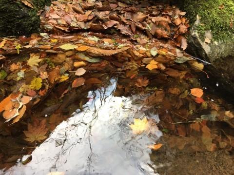 秋のトレッキング   大鹿滝_e0115904_05053191.jpg