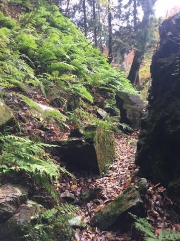 秋のトレッキング  出会の滝_e0115904_05150106.jpg