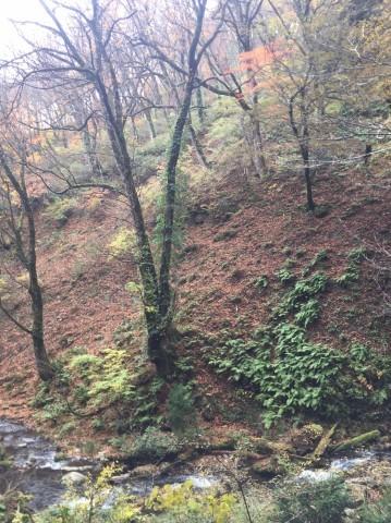 秋のトレッキング  出会の滝_e0115904_07430102.jpg