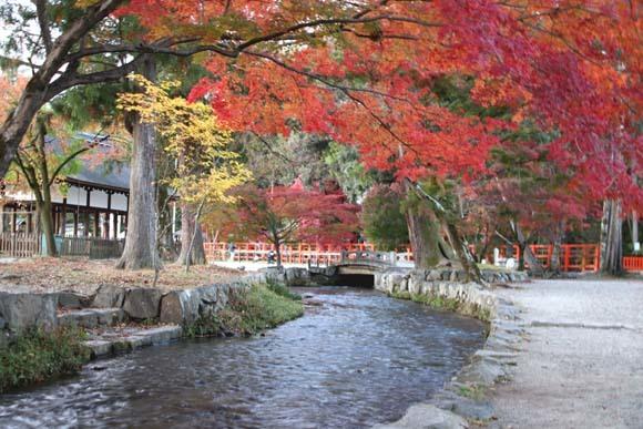 紅葉が盛り 上賀茂神社_e0048413_22563645.jpg