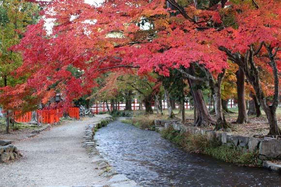 紅葉が盛り 上賀茂神社_e0048413_22563860.jpg