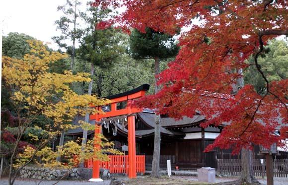 紅葉が盛り 上賀茂神社_e0048413_22564114.jpg