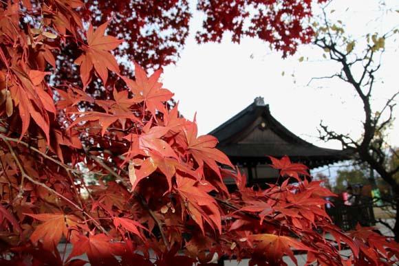 紅葉が盛り 上賀茂神社_e0048413_22564806.jpg