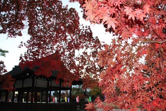 紅葉が盛り 上賀茂神社_e0048413_22565114.jpg