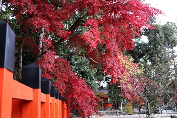 紅葉が盛り 上賀茂神社_e0048413_22565518.jpg