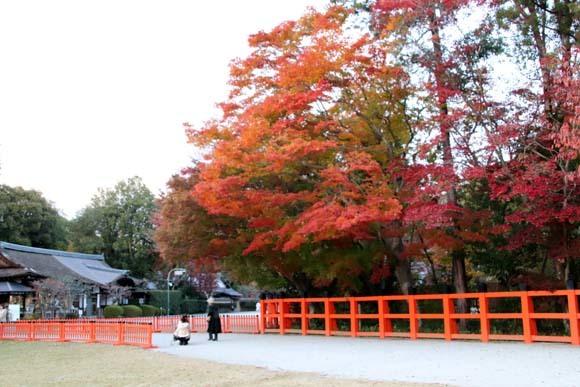 紅葉が盛り 上賀茂神社_e0048413_22570472.jpg