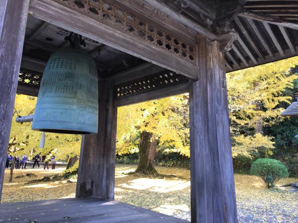 広徳寺の大銀杏 @あきる野_b0157216_12102411.jpg