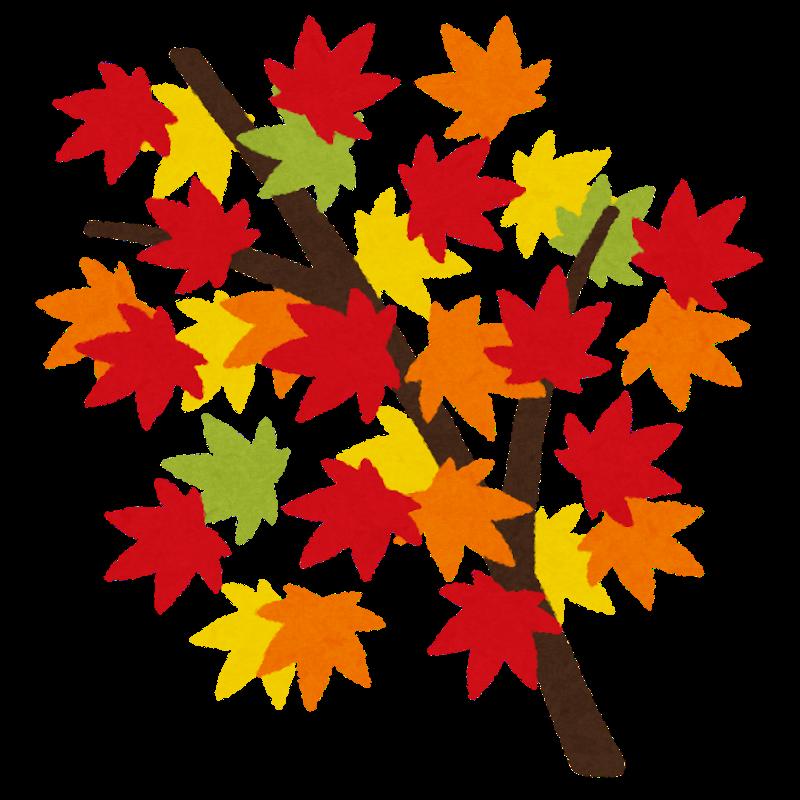 秋に感じる事とは・・・_c0157523_07280128.png