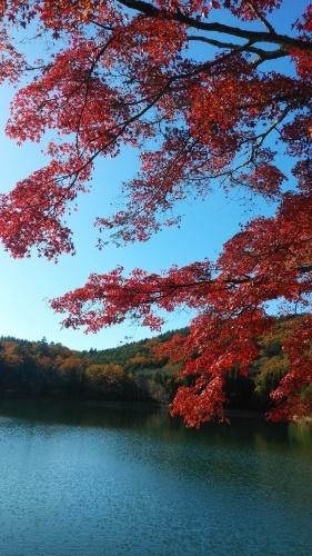 四尾連湖の紅葉の巻き(^^)_d0167225_09072931.jpg