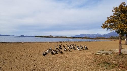 猪苗代湖へ♪_f0165126_16043284.jpg