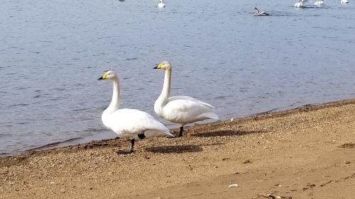 猪苗代湖へ♪_f0165126_16064517.jpg