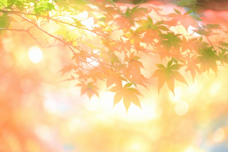 秋色_a0294534_13434084.jpg