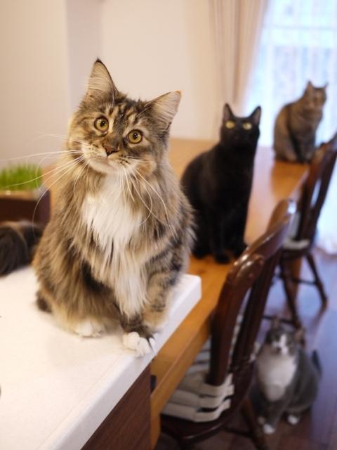 猫のお留守番 天ちゃん麦くん茶くん〇くんAoiちゃん編。_a0143140_22353946.jpg