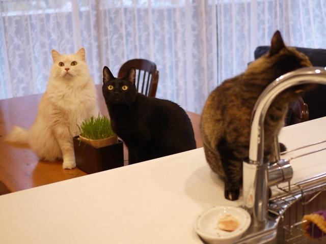 猫のお留守番 天ちゃん麦くん茶くん〇くんAoiちゃん編。_a0143140_22361141.jpg
