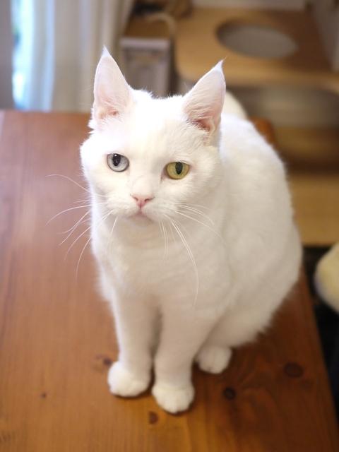 猫のお留守番 リュウちゃん編。_a0143140_22542452.jpg
