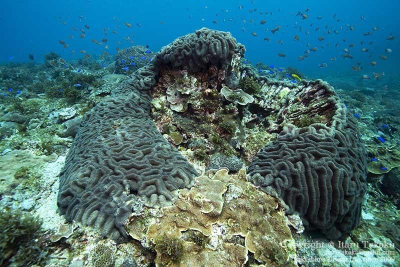 大隅諸島・竹島の海 -サンゴ調査より-_b0186442_21382040.jpg
