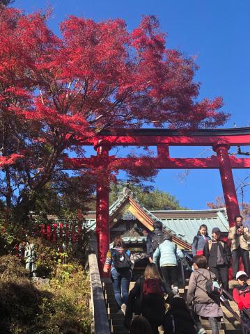 女将、高尾山に挑戦!_e0230154_19194179.jpg