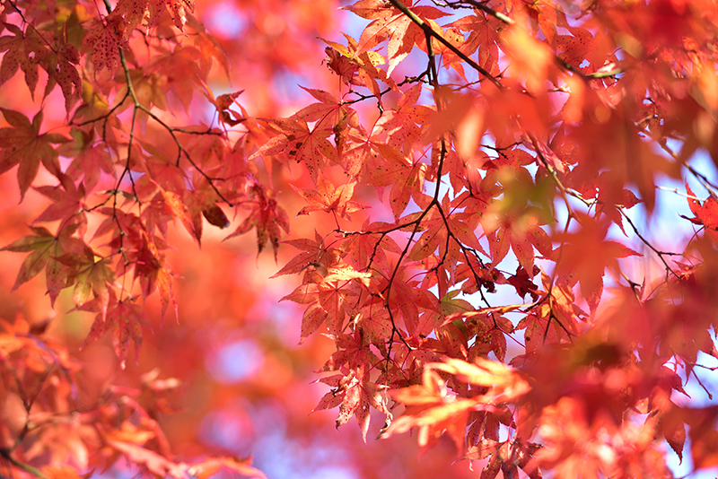 秋色の湖東三山_e0164563_15315884.jpg