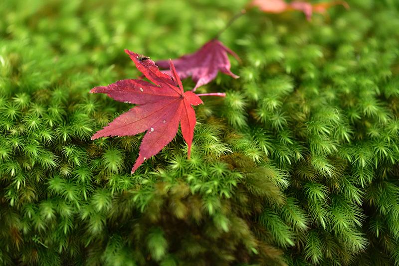 秋色の湖東三山_e0164563_15315934.jpg