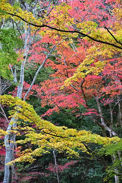 秋色の湖東三山_e0164563_15320127.jpg