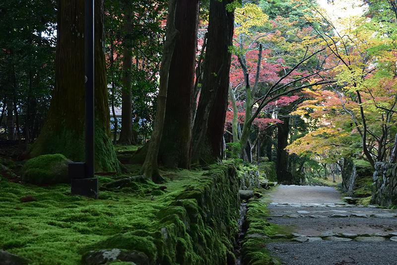 秋色の湖東三山_e0164563_15320157.jpg