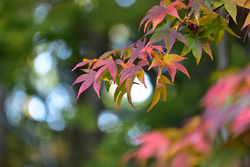 秋色の湖東三山_e0164563_15320159.jpg